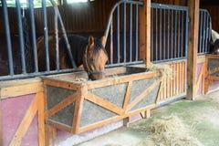 лошади стабилизированные Стоковые Фотографии RF
