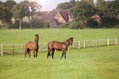 Лошади стоят на луге Стоковая Фотография RF