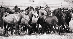 лошади табуна молодые стоковая фотография rf