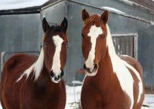 лошади фермы Стоковое фото RF