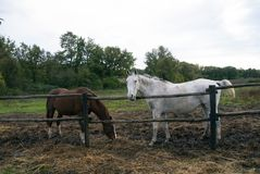 2 лошади, 2 цвета стоковое фото rf