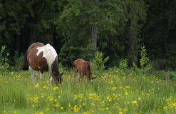 лошади стоковое фото rf