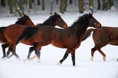 лошади Стоковая Фотография RF