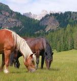 лошади alps Стоковое фото RF
