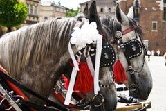 лошади krakow Польша Стоковое Изображение