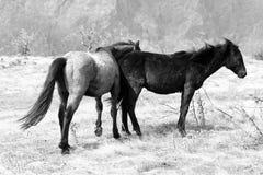 Лошади Mauntain Стоковое фото RF