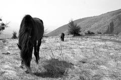 Лошади Mauntain Стоковые Изображения