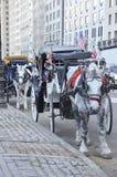 лошади New York города экипажа Стоковые Изображения RF