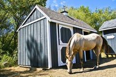 лошадь амбара стоковая фотография