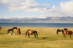 Лошадь в большом луге на озере kul песни, Naryn Кыргызстана Стоковые Изображения RF