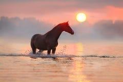 Лошадь в воде на солнечном свете стоковое фото