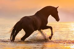 Лошадь в воде на солнечном свете стоковое изображение rf