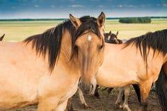 Лошадь в выгоне бежевого цвета Стоковые Фото