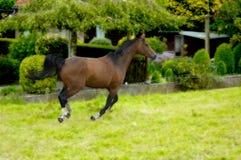Лошадь в действии стоковые фотографии rf