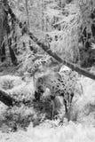 Лошадь в древесине сказки Стоковая Фотография RF