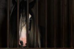 Лошадь в клетке конюшни Стоковая Фотография