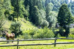Лошадь в поле за загородкой Стоковые Фотографии RF