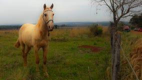 Лошадь в поле смотря к фронту стоковые изображения