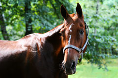 Лошадь в сельской местности Стоковое Фото