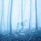 Лошадь в туманном ландшафте леса Стоковые Изображения