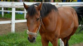 Лошадь в paddock