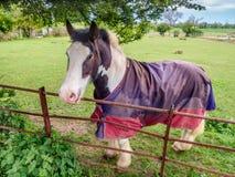 Лошадь в paddock в сельской местности рассматривая загородка Стоковые Изображения RF