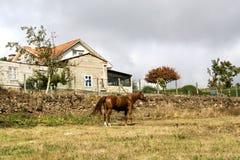 Лошадь, Галиция, дорога к Santiago de Compostela стоковые фотографии rf