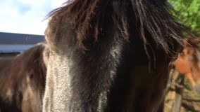 лошадь глаза элемента конструкции сток-видео