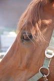 лошадь глаза Стоковое фото RF