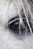лошадь глаза Стоковое Фото