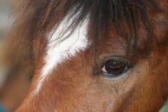 лошадь глаза стоковые фотографии rf