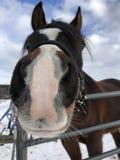 Лошадь говоря здравствуйте! стоковое изображение rf