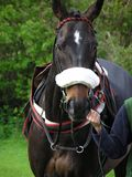 Лошадь гонки Стоковое Изображение