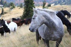 Лошадь горы Стоковое фото RF