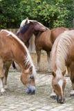 лошадь двора подавая Стоковые Изображения RF