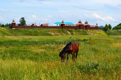 Лошадь залива в поле на деревенской предпосылке стоковая фотография rf