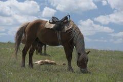 Лошадь залива в проводке Стоковые Фотографии RF