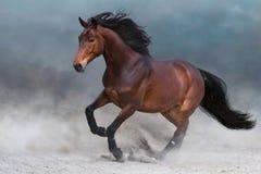 Лошадь залива в пыли стоковое фото rf