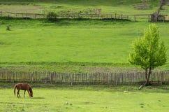 Лошадь залива пасет на ограженном выгоне на горном склоне стоковые фотографии rf