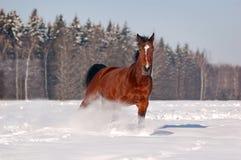 лошадь залива galloping Стоковые Изображения RF