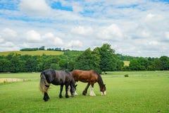 Лошадь идя в музей Weald & Downland живущий стоковое фото rf