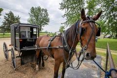 Лошадь и багги Амишей, прицепили стоковые изображения rf
