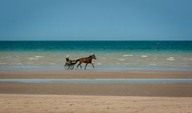 Лошадь и багги идя рысью на пляже стоковое фото rf