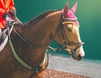 Лошадь и всадник в красной форме на конкуренции скакать выставки Стоковая Фотография