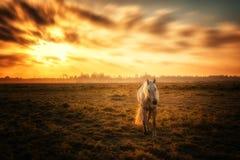 Лошадь и заход солнца стоковая фотография rf