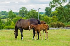 Лошадь и осленок на выгоне стоковая фотография