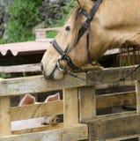 Лошадь и свинья стоковое фото rf