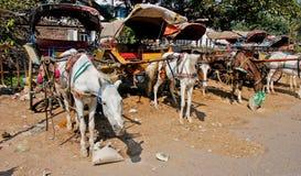 Лошадь и экипаж в Индии стоковая фотография rf