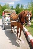 лошадь кареты стоковое фото rf