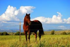 лошадь каштана Стоковые Фотографии RF